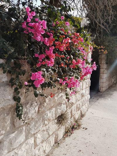 ramallah Streetphotography VSCO Vscocam Travel Photography