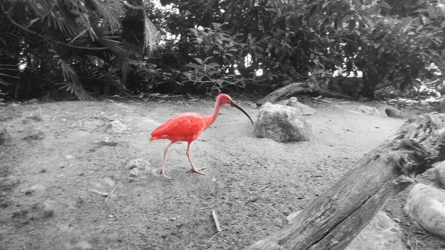 Make The Difference Bird Animal Themes One Animal No People Animals In The Wild Nature Outdoors Flamingo Nature Black And White Tranquility Beauty In Nature Landscape