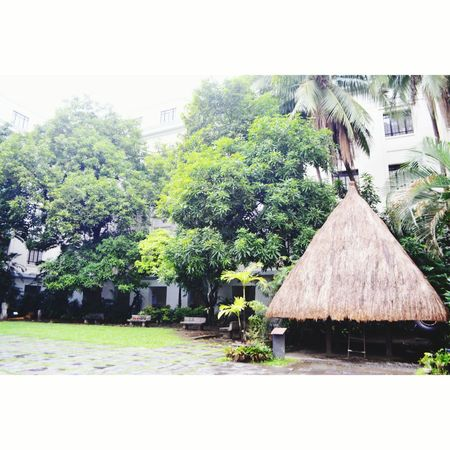 Bahay Kubo Architecture Built Structure Tree Thatched Roof No People Building Exterior Day Outdoors Sky