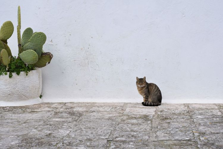 Cat Feline Domestic Cat Mammal Animal Themes Animal Pets Domestic Domestic Animals Vertebrate One Animal No People Sitting Wall - Building Feature Built Structure Architecture Portrait Day Plant Wall Whisker