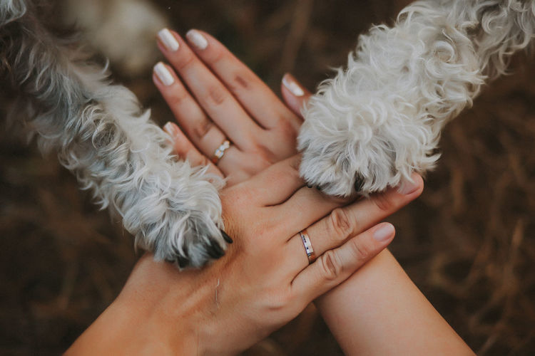 Midsection of woman holding dog