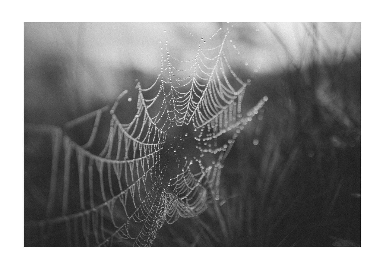 CLOSE-UP OF SPIDER WEB ON DEW DROPS