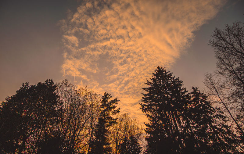 Tranquil Scene Tranquility Scenics - Nature Beauty In Nature Nature No People Tree Plant Sky Sunset Silhouette Forest Low Angle View Growth Cloud - Sky Orange Color Land Non-urban Scene Coniferous Tree WoodLand Pine Tree Pine Woodland