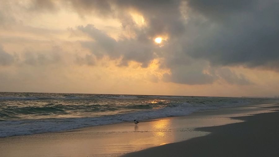 Bird watching sunset Water Wave Sea Low Tide Sunset Beach Backgrounds Sand Sun Reflection