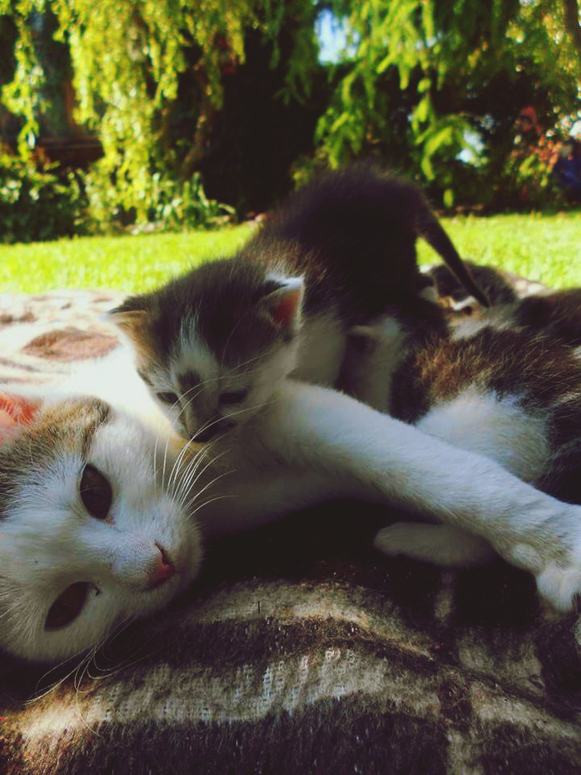 animal themes, mammal, domestic animals, one animal, pets, relaxation, resting, close-up, domestic cat, two animals, lying down, focus on foreground, tree, cat, day, no people, field, nature, dog, sunlight