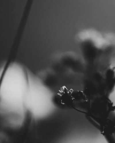Shadow Indoors  Close-up No People Beauty In Nature Fragility Flower Black & White Illuminated Darkness And Beauty EyeEm Best Shots Small Flowers Flowers Flower Head Beauty In Ordinary Things Close Up