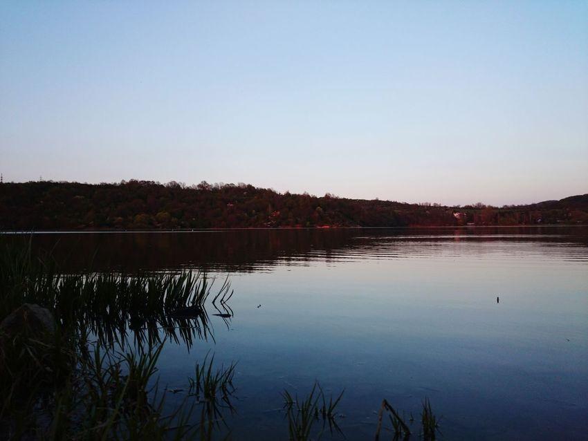 Reservoir Water Forest