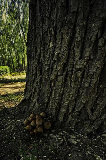 林间小蘑菇,藏在树深处,莫彰身与名,免教吃下肚。 mushroom Mushroom Tree Trunk Tree Nature Woods Spring Shadow