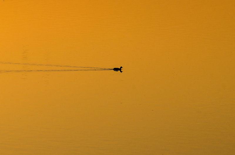 Silhouette birds flying against orange sky