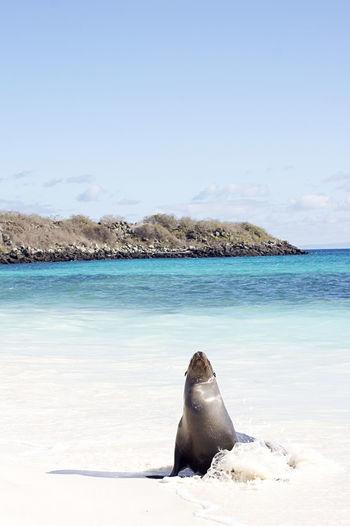 Sea lion on beach at galapagos islands