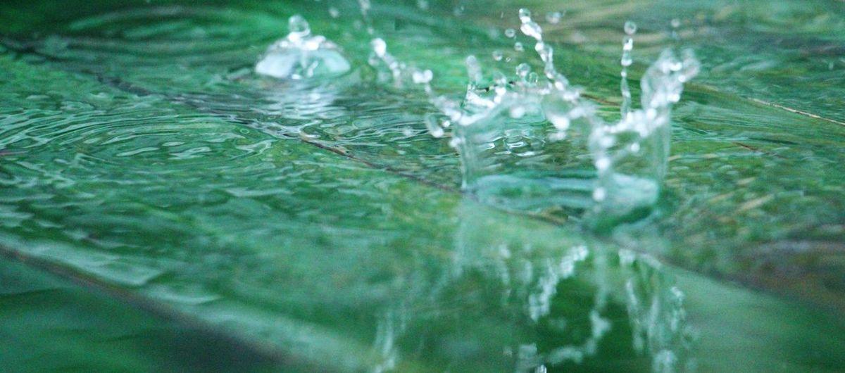splash Close-up Day Green Nature No People Rain RainDrop Raindrops Splashing Watedrops Water