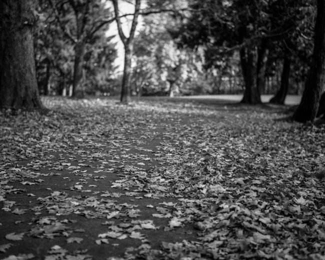 Forest path Tree Forest Autumn Tree Trunk Leaf Road