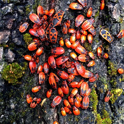 Bugs Bugslife Nature Beauty Of Nature Life Creatures On A Tree