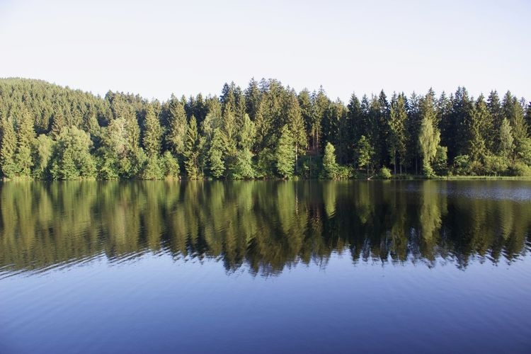 Beauty In Nature Clear Sky Day Growth Lake Nature No People Outdoors Reflection Reflection Lake Scenics Sky Tranquil Scene Tranquility Tree Water
