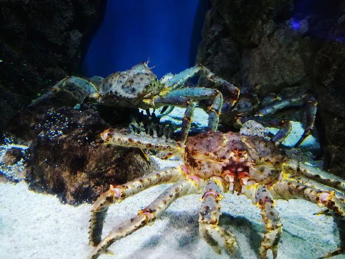 St. Petersburg, Russia Underwater World Nature Water Oceananimals Oceanarium Eye4photography  Travel Destinations