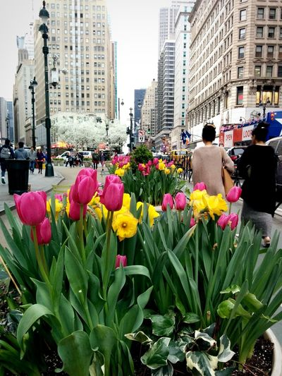 Walking by flowers. Street Photography Vibrant Flowers Walkers Daylight Springtime 365project Nexus 5 NYC Photography NYC