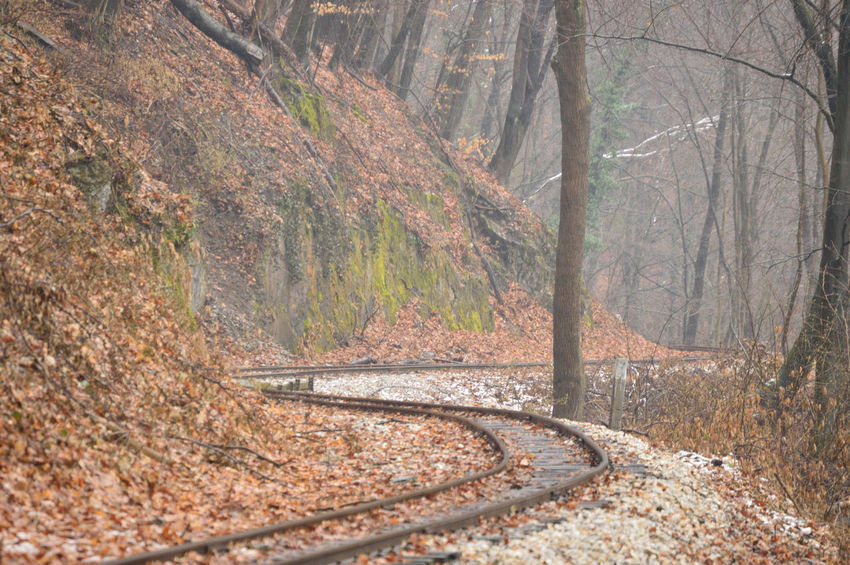 Railway on the forest Winter Cold Temperature Forest Forest Photography No People Non-urban Scene Rail Railway Track Tracks