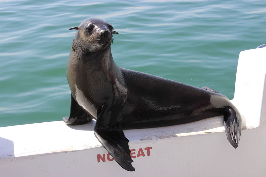 Animal Posing Funny Situation Harbor Seals Harbour Seal Harbour Seals Seal Wild Animal Wild Animals Wild Animals Up Close