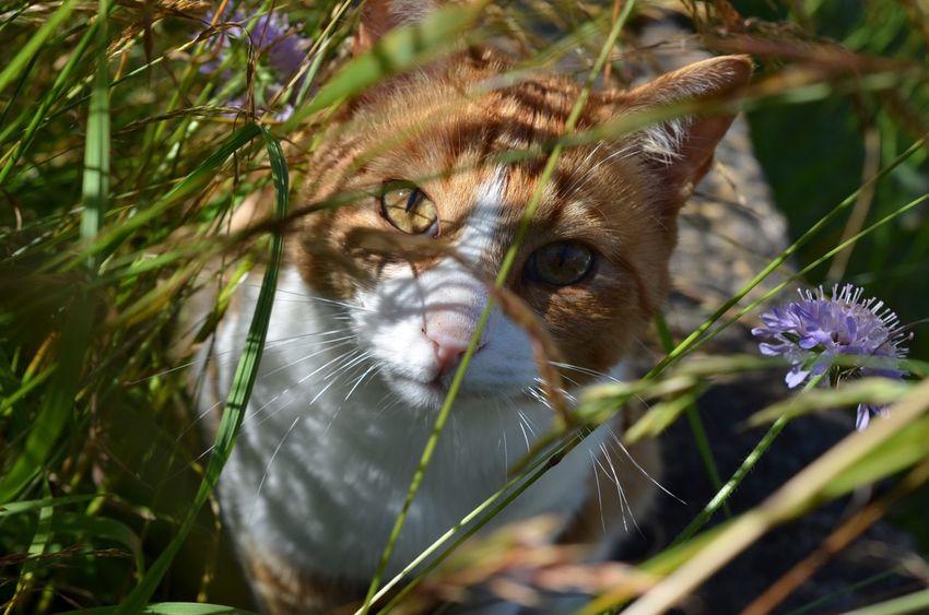 Cat Outdoors