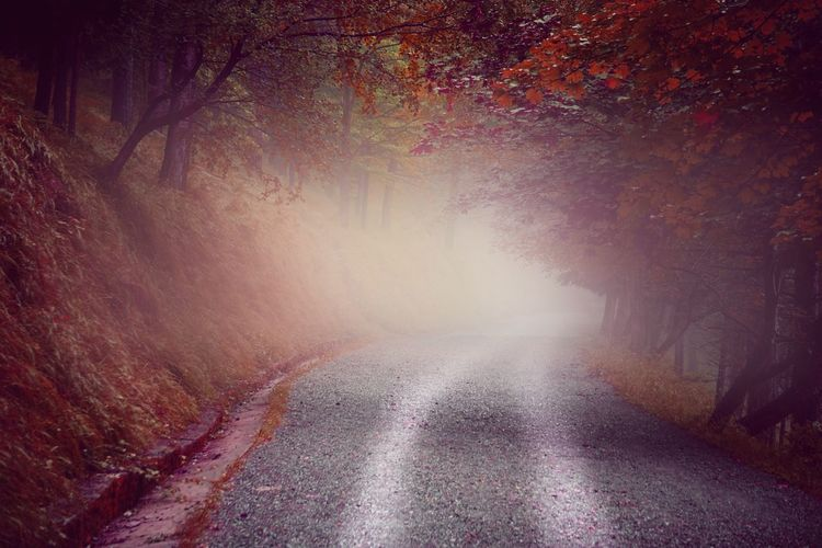 Tree Nature Tranquility The Way Forward No People Day Road Beauty In Nature Nature Landscape Forest Path Trees Fog Scenics Outdoors