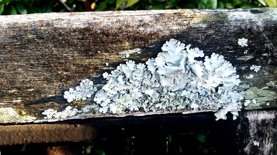 Textured  Lichen Old Wooden Bench Close-up