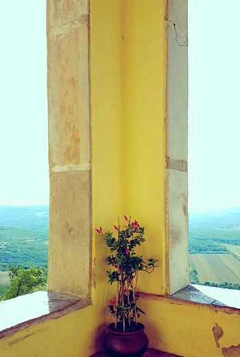 Flower No People Yellow Day Architectural Column Beauty In Nature Nature Sky Fragility Connected By Travel The Still Life Photographer - 2018 EyeEm Awards