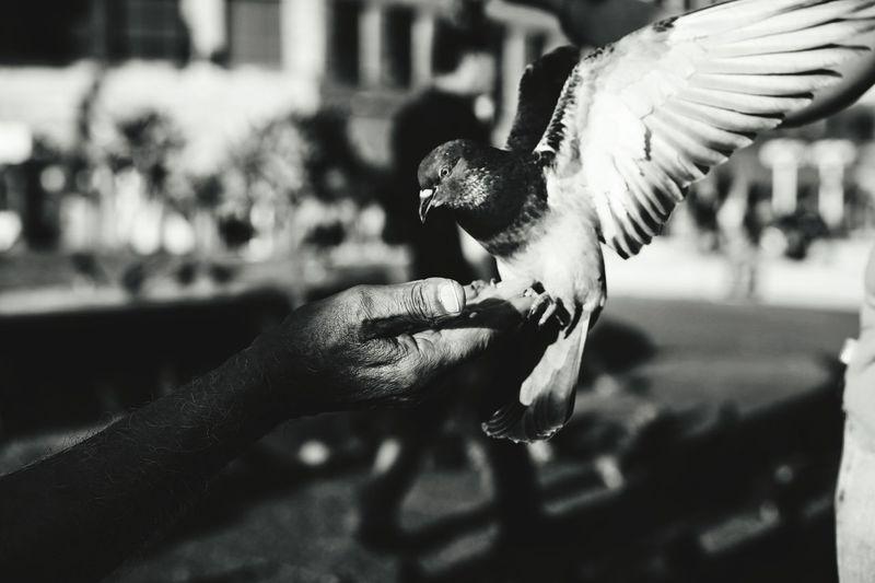 The Street Photographer - 2017 EyeEm Awards Streetphotography EyeEm Street EyeEm Best Shots Blackandwhite Photography Streetphoto_bw EyeEm Week EyeEm The Best Shots Eyeem4photography Black And White Photography Bird Human Hand