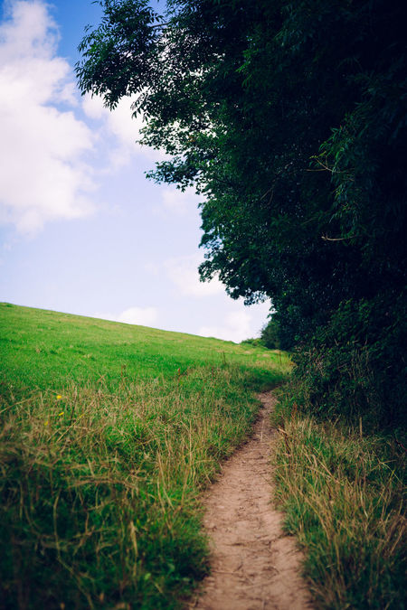 Agriculture Beauty In Nature Crop  Day Field Grass Green Color Growth Landscape Nature No People Outdoors Plant Rural Scene Scenics Sky The Way Forward Tranquil Scene Tranquility Tree