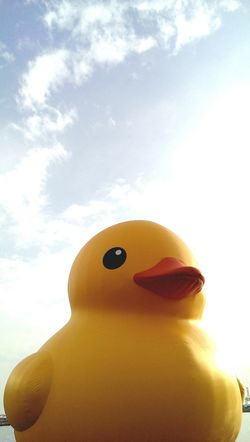 Yellow rubber duck. Taking Photos Toys