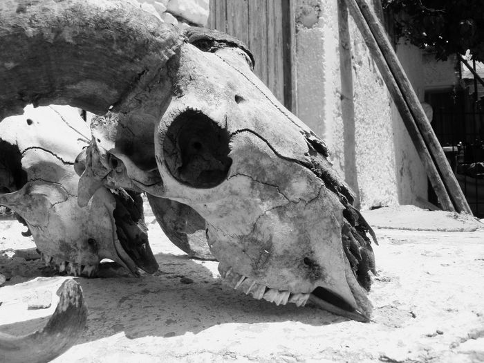 The Skull of a