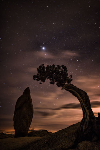 Tree by rock formation at joshua tree national park against starry sky