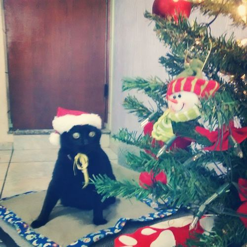 Pq aqui o gato tbem vira enfeite de natal huahauah Pele Feliznatal Clinvet