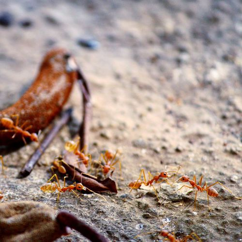 Canon Canonphotography Ants Nature Canon_india EyeEm Best Shots EyeEm Nature Lover EyeEm Animal Themes Close-up No People Outdoors Nature Beach Sand Animals In The Wild Day Animal Leg Claw