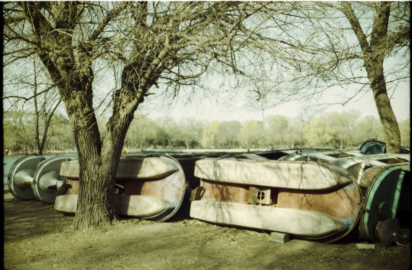 Analogue Photography Boats No People Paddleboat Resting Tree Waiting
