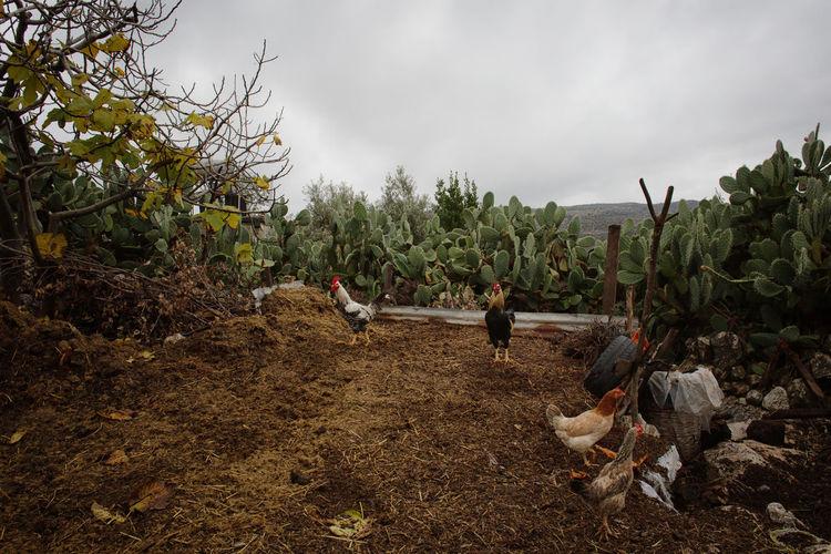Farm Land Plant
