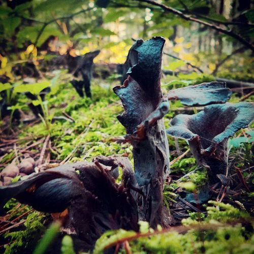 Nagykanizsa Hungary Magyarország Magyar Mik Ikozosseg Fotoklub Csonakazoto Csoto Mushroom Mushy Gomba Naturelovers Natureaddict Naturegram Nature Ptk_nature Worldbestgram Followme