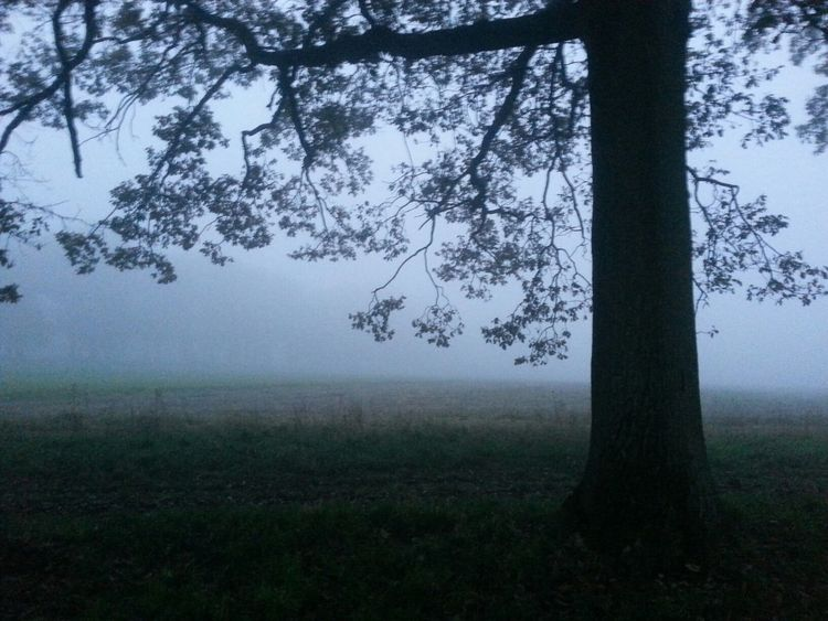 No Edit/no Filter TreePorn just wait...the mist will pass
