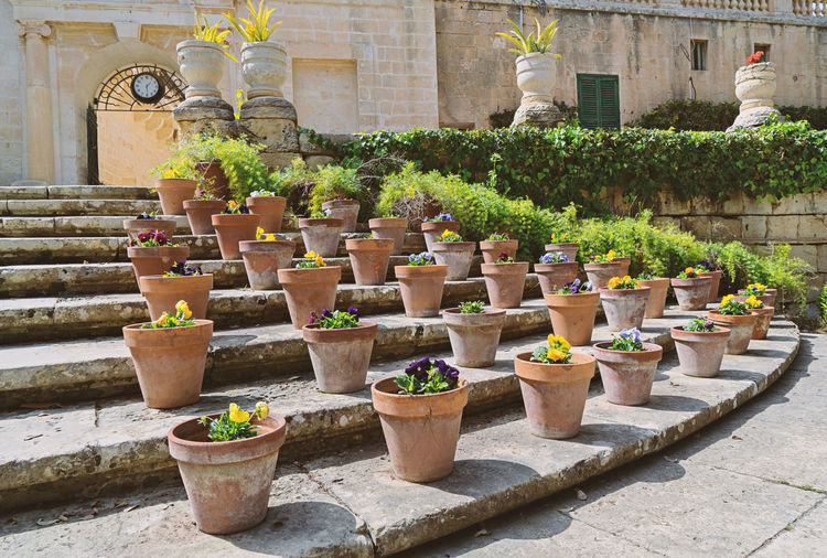 Pansies flowers in the presidential garden Sr. Anton. Attard Gardening Malta Architecture Building Exterior Built Structure Day Flower Garden Growth Nature No People Outdoors Pansy Flower Plant Potted Plant Summer Terracotta The Graphic City