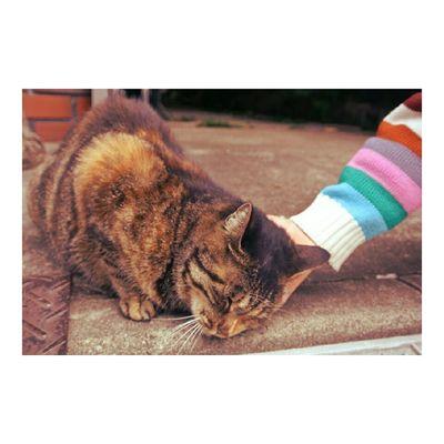 この前のたか散歩 お気に入りショット 谷中 ねこ こども Instacat Cat Yanaka Tokyo Shitamachi