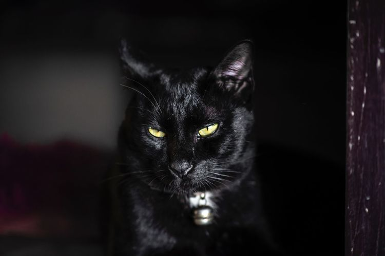 Black cat close up Looking Dark Pets Mammal Cat Domestic Animals Animal Themes Domestic Domestic Cat Animal One Animal Looking At Camera Portrait Close-up Animal Body Part No People Vertebrate Whisker Focus On Foreground Indoors  Black Color