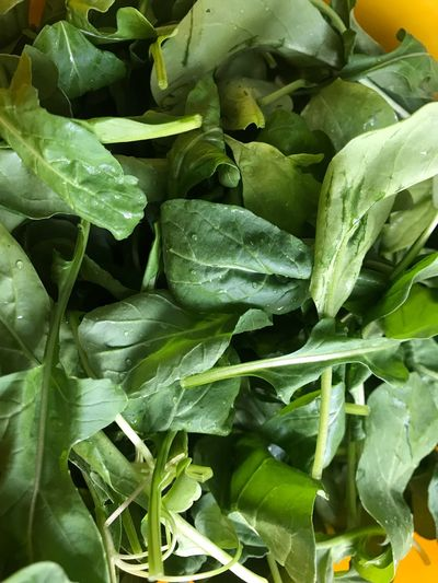 Fresh arugula Green Leaves Green Rucula Rocuile Arugula Green Color Leaf Plant Part Growth Food And Drink Plant Close-up Freshness No People Full Frame Food Backgrounds Wellbeing Nature Healthy Eating Beauty In Nature Vegetable Water Day