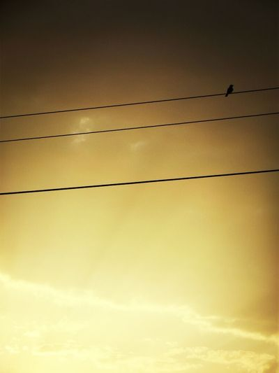 A lonely bird... Taking Photos Sunset Birds Lookingup