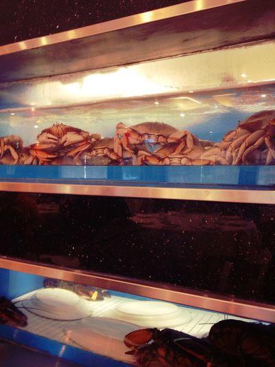 Dim sum at Sea Harbour Seafood Restaurant Dim Sum