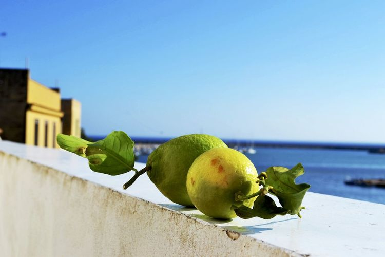 Close-Up Of Limes On Retaining Wall Against Sea