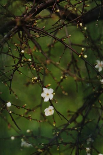 Canonphotography Canon_photos EyeEmNewHere Flowerphotography Eye4photography  Kadrajimdan EyeEm Flower Flowerphotography Flower Sunset Flower Flower Collection EyeEm Gallery Flower Tree Flower Head Branch Springtime Blossom White Color Close-up Plant Orchard