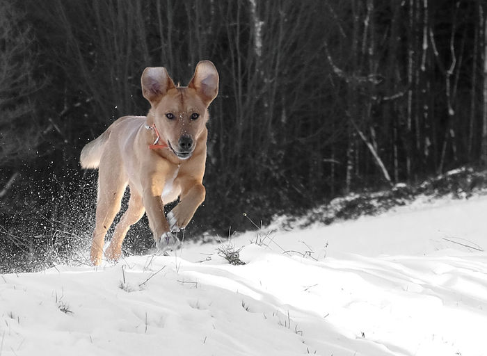 Animal Themes Beauty In Nature Cold Temperature Day Dog Dog Running Domestic Animals Forest Fun Mammal Motion Nature No People One Animal Outdoors Pets Portrait Snow Tree Winter