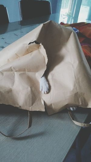 Cat in a bag, Hello is someone there?