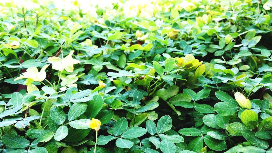 Greenery Small Flower
