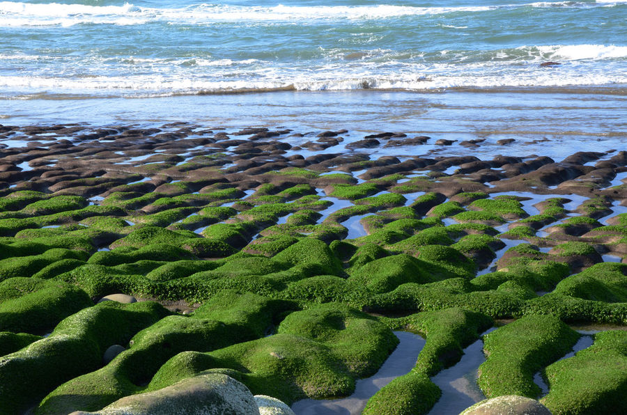 Beach Beauty In Nature Day Green Color Horizon Over Water Nature No People Outdoors Sand Scenics Sea Shore Sky Tranquility Water Wave 台灣 老梅石槽