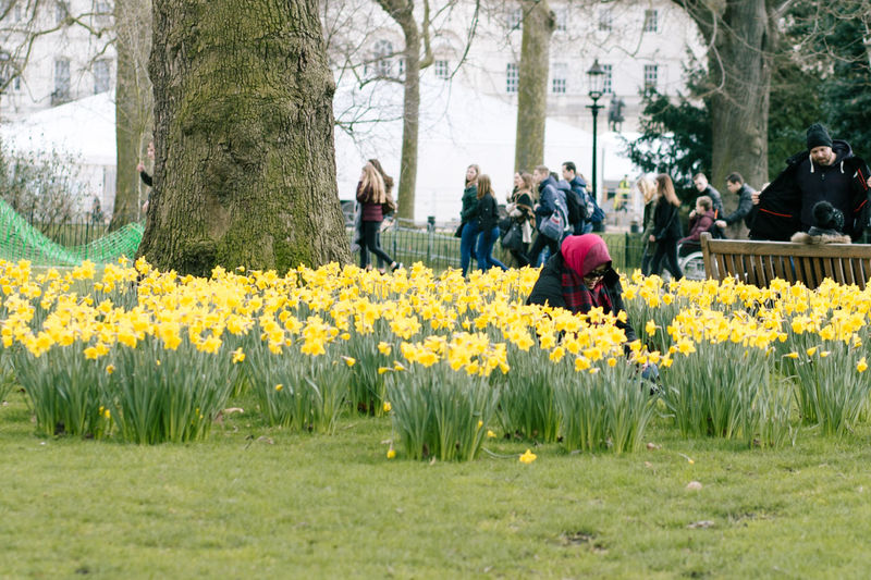 People and yellow flowers blooming on field